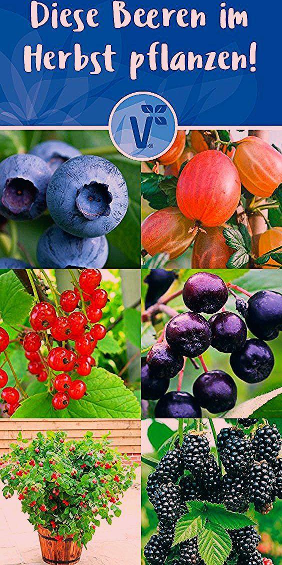 Photo of Diese Obstpflanzen kannst du im Herbst pflanzen!