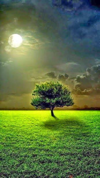 Nature –