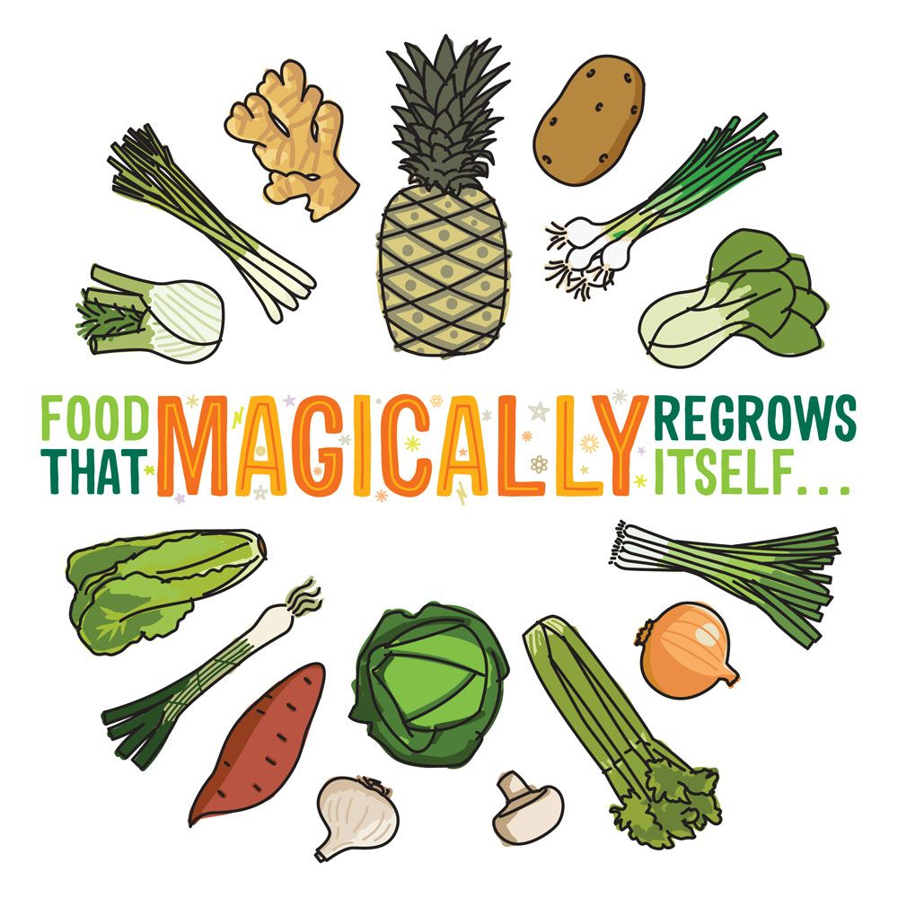 food that magically regrows itself from kitchen scraps green living pinterest gartentipps. Black Bedroom Furniture Sets. Home Design Ideas