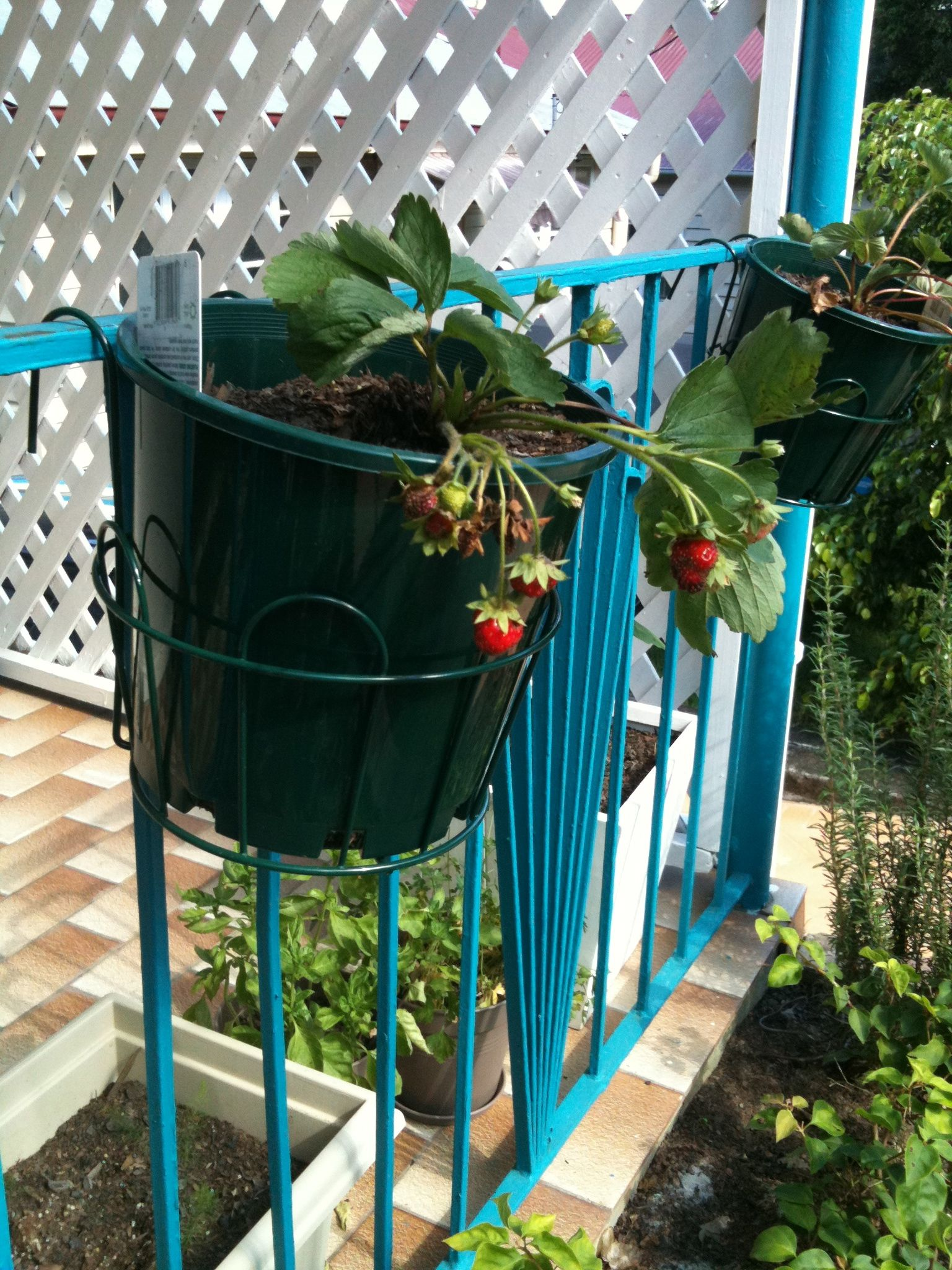 Patio garden I want some of these wire pot holders to hang my