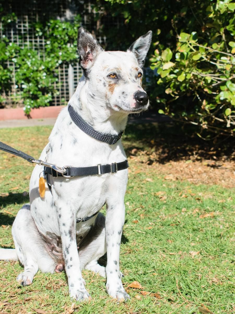 The Best Ever Walking Harness For Your Dog And The Must Avoid