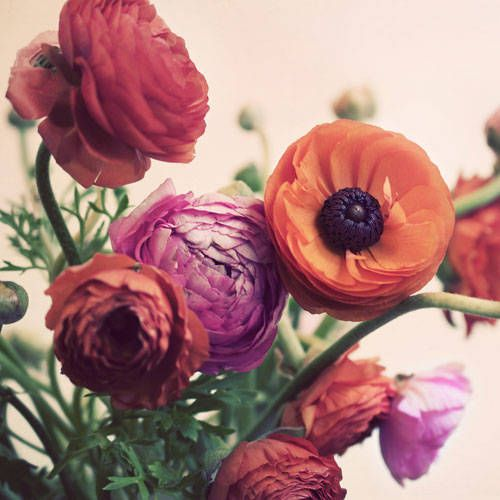 The Secret Meanings Behind Your 30 Favorite Flowers Flowers Photography Ranunculus Flowers Flowers