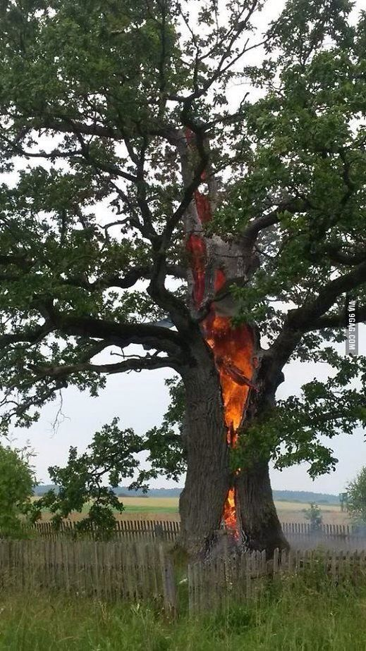 Tree Struck By Lightning Cool Unique Trees Hole In
