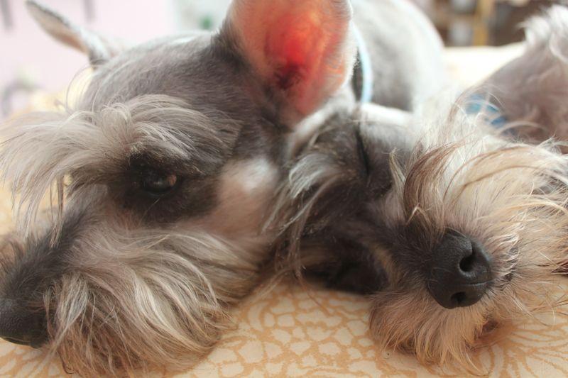 Chikis & Mini