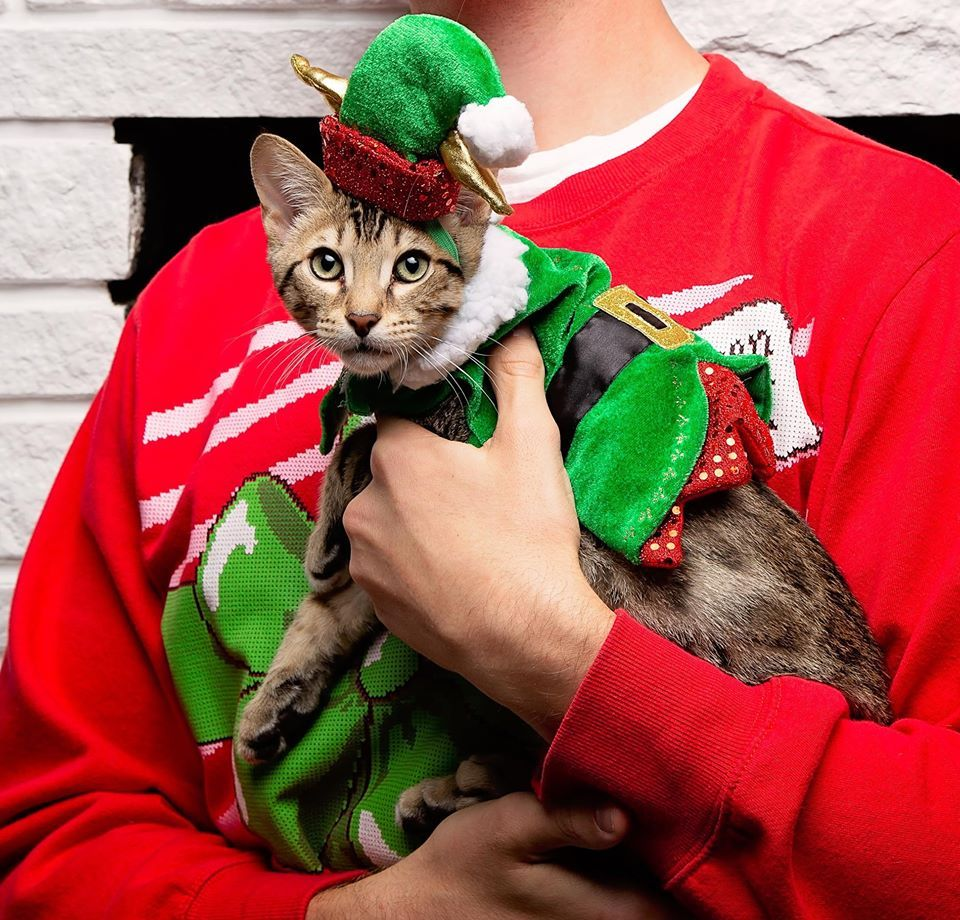 Are You Dressing Your Pets Up This Year With Holiday Gear From Petsmart Us Too Cool Things To Buy Holiday Shop Petsmart