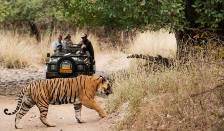 Safari Tour In India Can Be Very Adventurous Safari Tour India