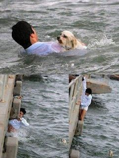 only he had the guts to risk his life to save the dog