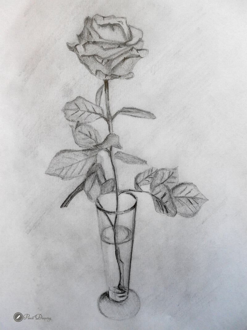 45 Images Drawn In Pencil Roses Cute Part3 Malen Nachmalen