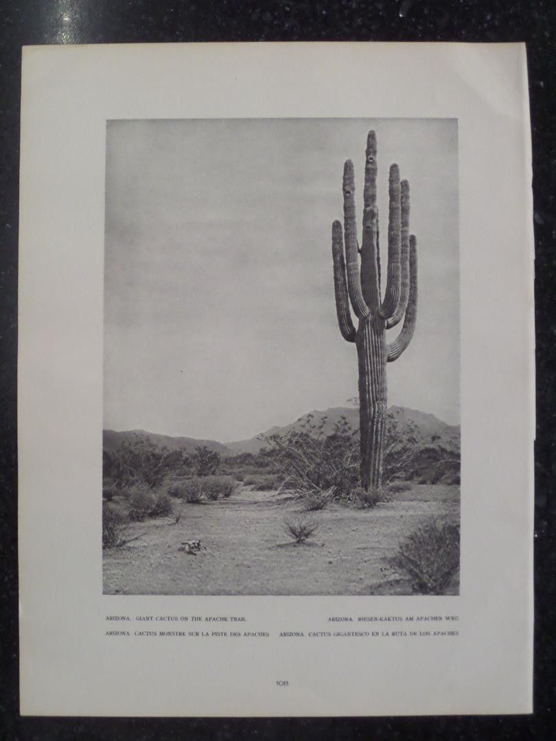 14 2016 Giant Cactus On The Apache Trail Arizona Photogravure 1927 By E O Hoppe Print From A Book By E O Hoppe P Vintage Art Prints Saguaro Cactus Saguaro