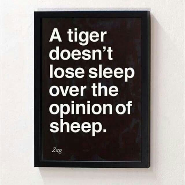 A tiger doesn't lose sleep over the opinion of sheep.  Zag