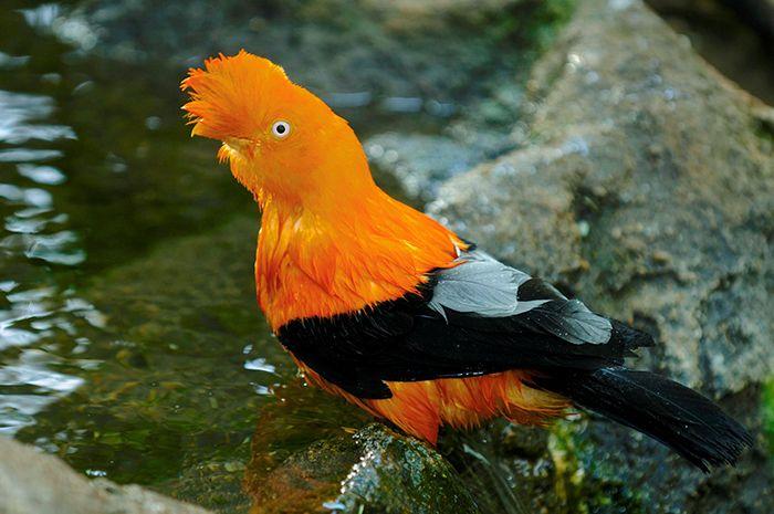 Pin by Kathleen Boehmig on Birds Birds, Pretty birds
