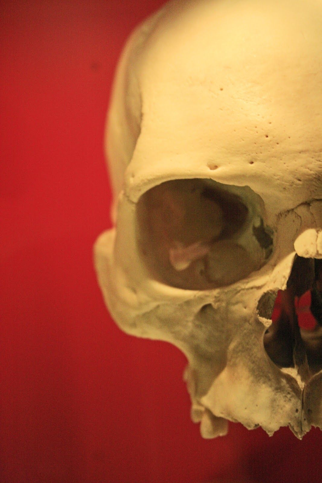 Blog - The Bone Collector - The (legal) business of buying and selling human bones on the internet