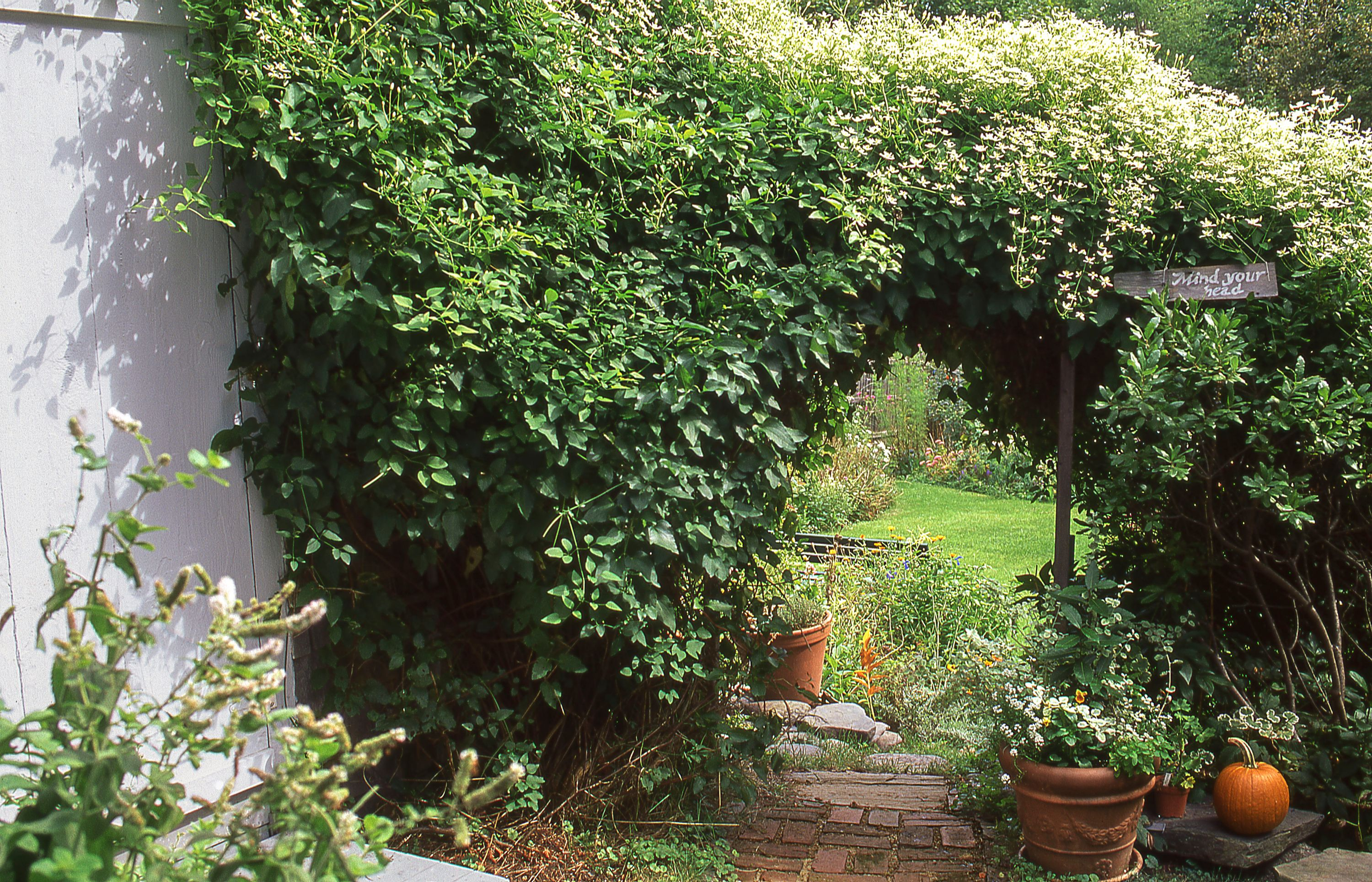 16 Fast Growing Vines To Add To Your Yard This Season Climbing Flowering Vines Fast Growing Vines Autumn Clematis