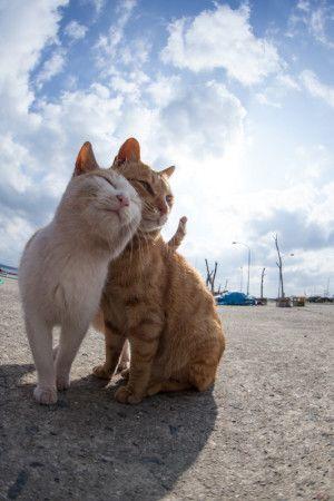 cat island funny gif