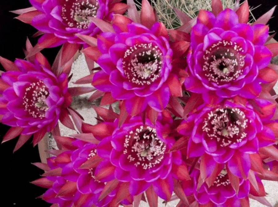 Dag 191/365 Cactusfilmpje