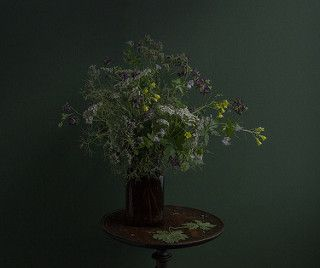 Wildflowers from an Abandoned Park   Ken Marten   Flickr