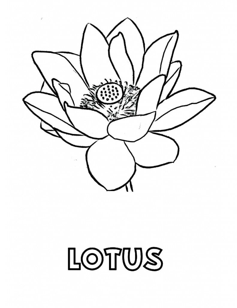 Free Printable Lotus Coloring Pages For Kids Flora Pinterest