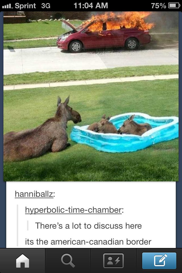 Usa And Canada Funny Pictures Tumblr Funny Funny