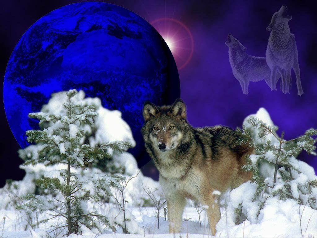 Wolves Wallpaper Winter Wolf Winter Wolves Wolf Background Wolf Wallpaper
