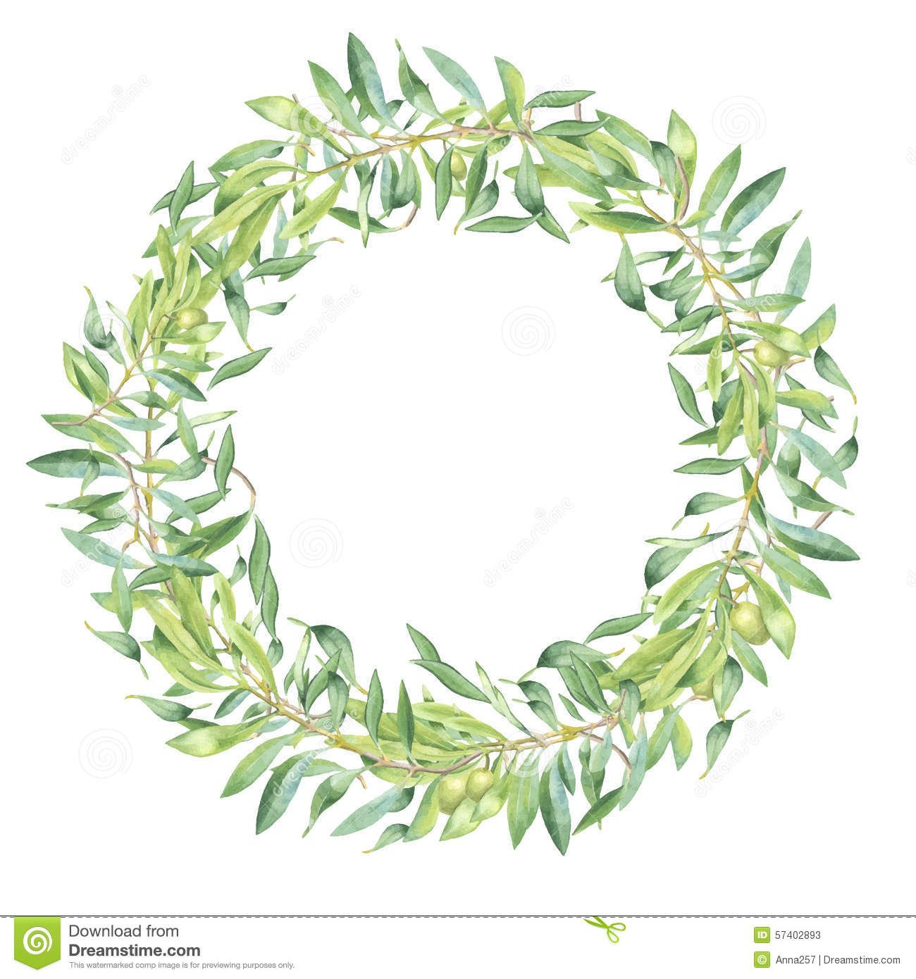 green-watercolor-olive-branch-frame-white-background-57402893.jpg ...