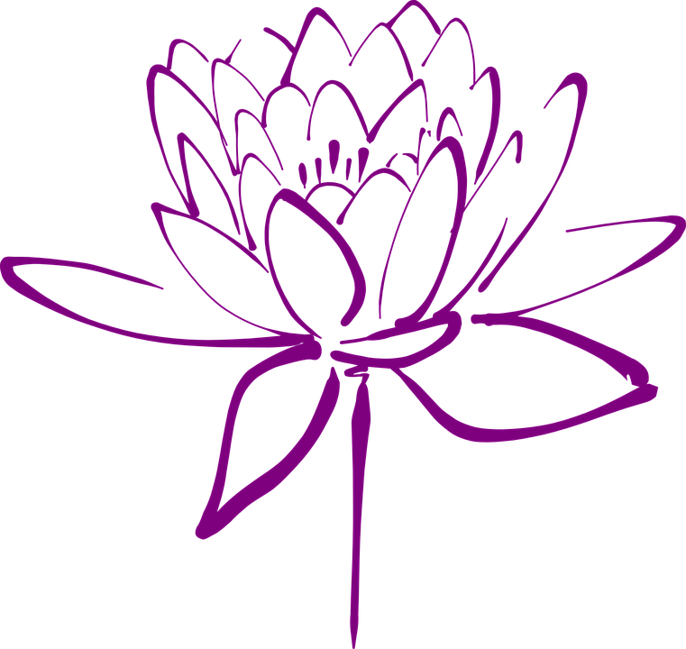Free Image on Pixabay Lotus, Flower, Blossom, Petals