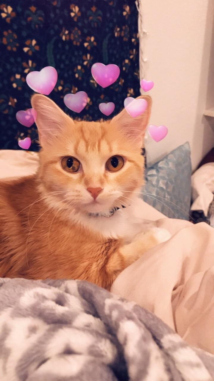 Sela Discovered Snap Filters Today Aww Cat Photography Cute Cats