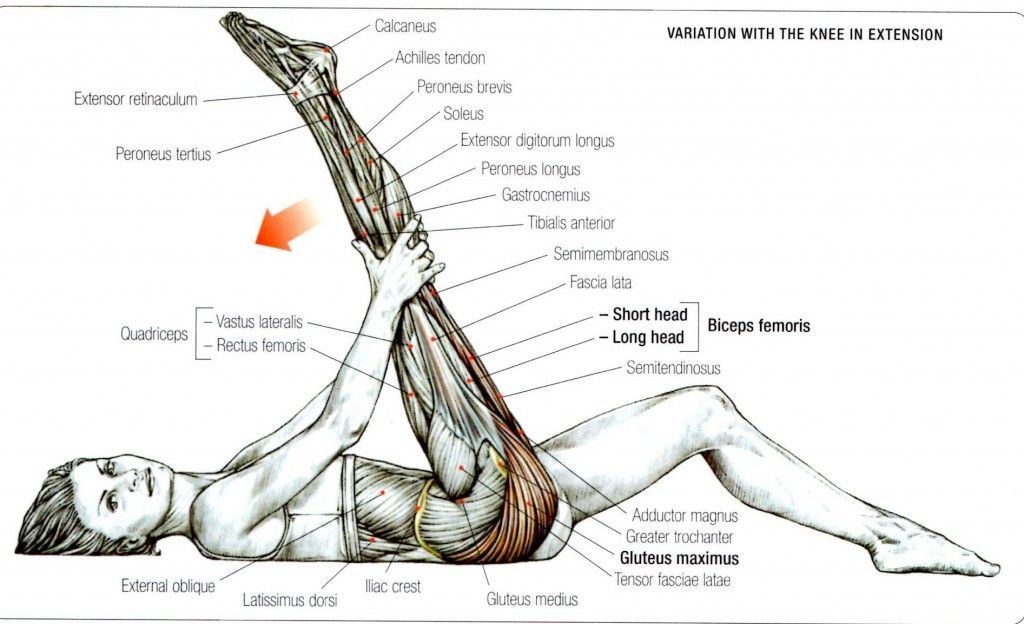 Stretching: How to Stretch the Gluteus Maximus Exercise 2 | Fitness ...