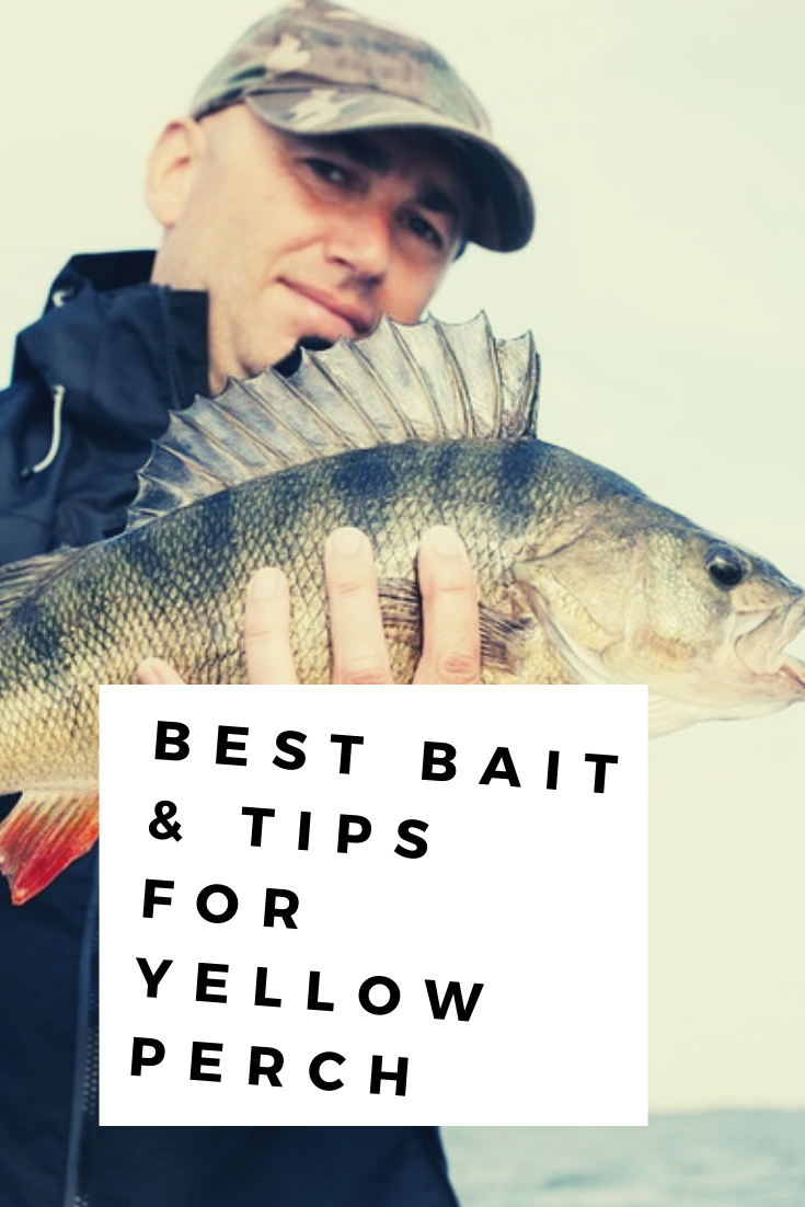 We've selected the tried-and-true tips & baits that catch