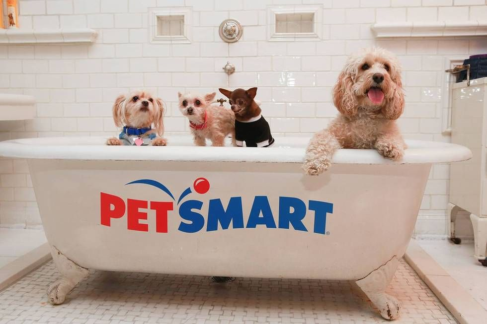 What S Cuter Than A Bathtub Full Of Puppies Our Spring Line