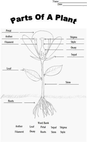 Plant Reproduction Worksheet Answers Parts Of A Flower in