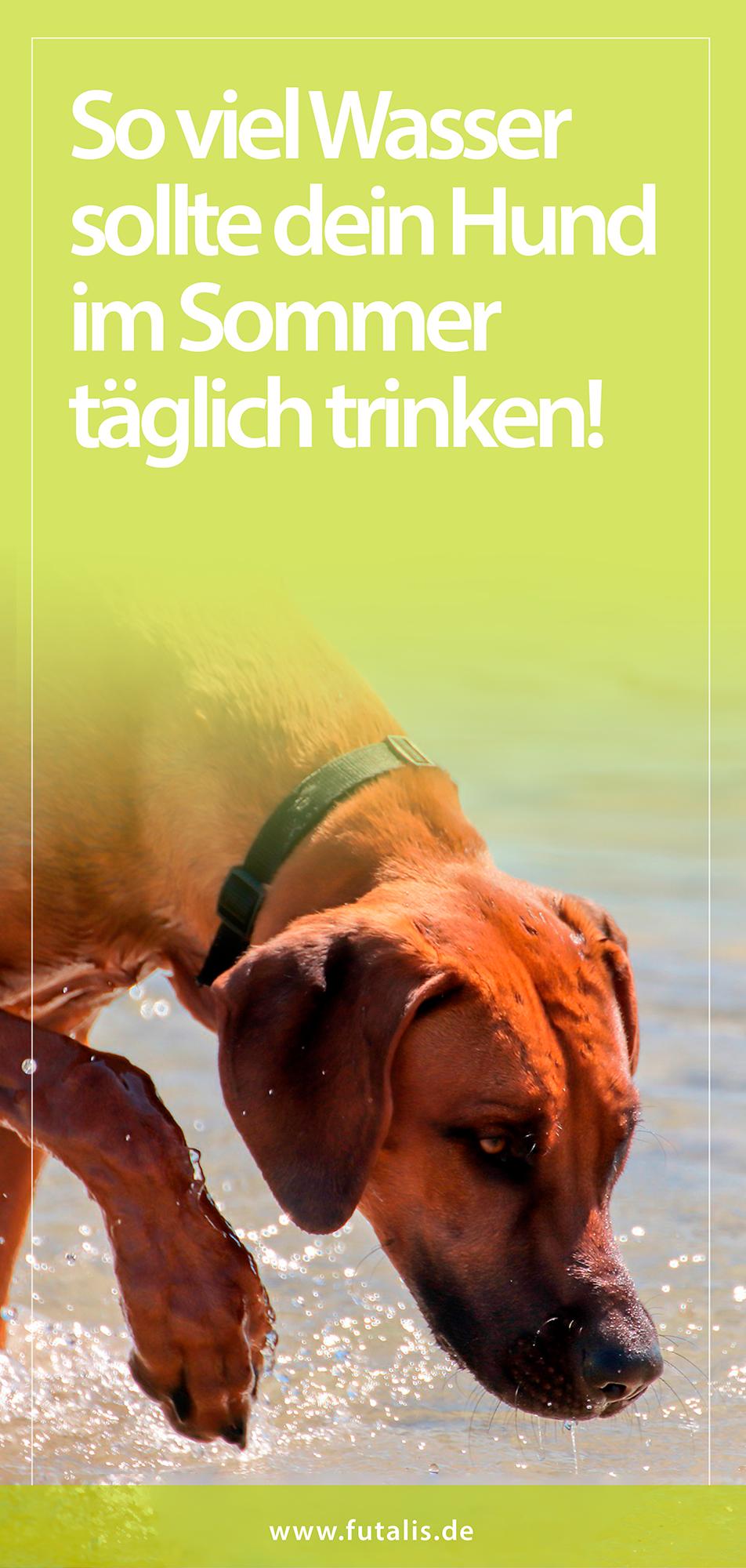 Damit Die Thermoregulation Bei Hunden Funktioniert Mussen Sie An Heissen Tagen Ausreichend Trinken Um Ihren Wasserhaus In 2020 Mit Bildern Hunde Hunde Ernahrung Gesunde Hunde