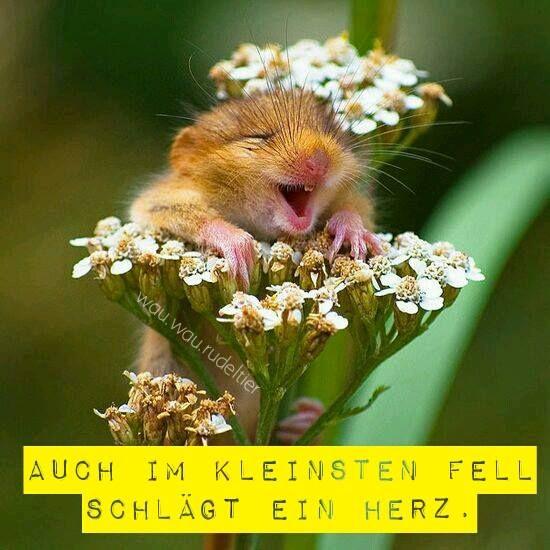 Auch im kleinsten #Fell schlägt ein Herz.  #noFUR #gegenPelz #Pelzfrei © wau.wau.rudeltier