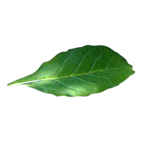 Tobacco Tobacco Png Images Image