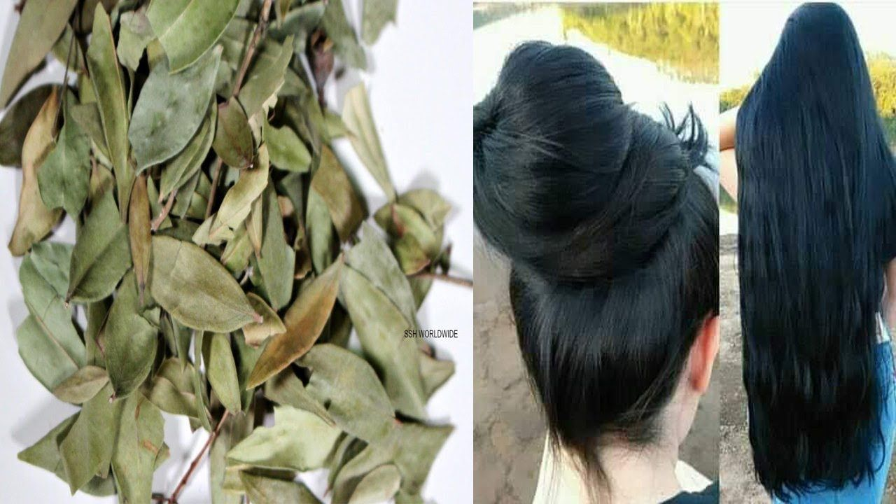 عشبة لو علمت النساء بمنافعها لتطويل الشعر وتكثيفة لاشتروها بالذهب لن تص Plants