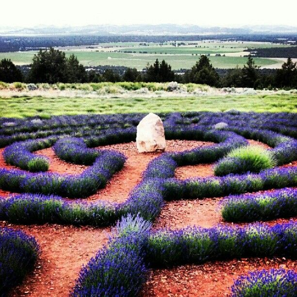 Labyrinth Lavender Garden Mt Shasta Ca Been There