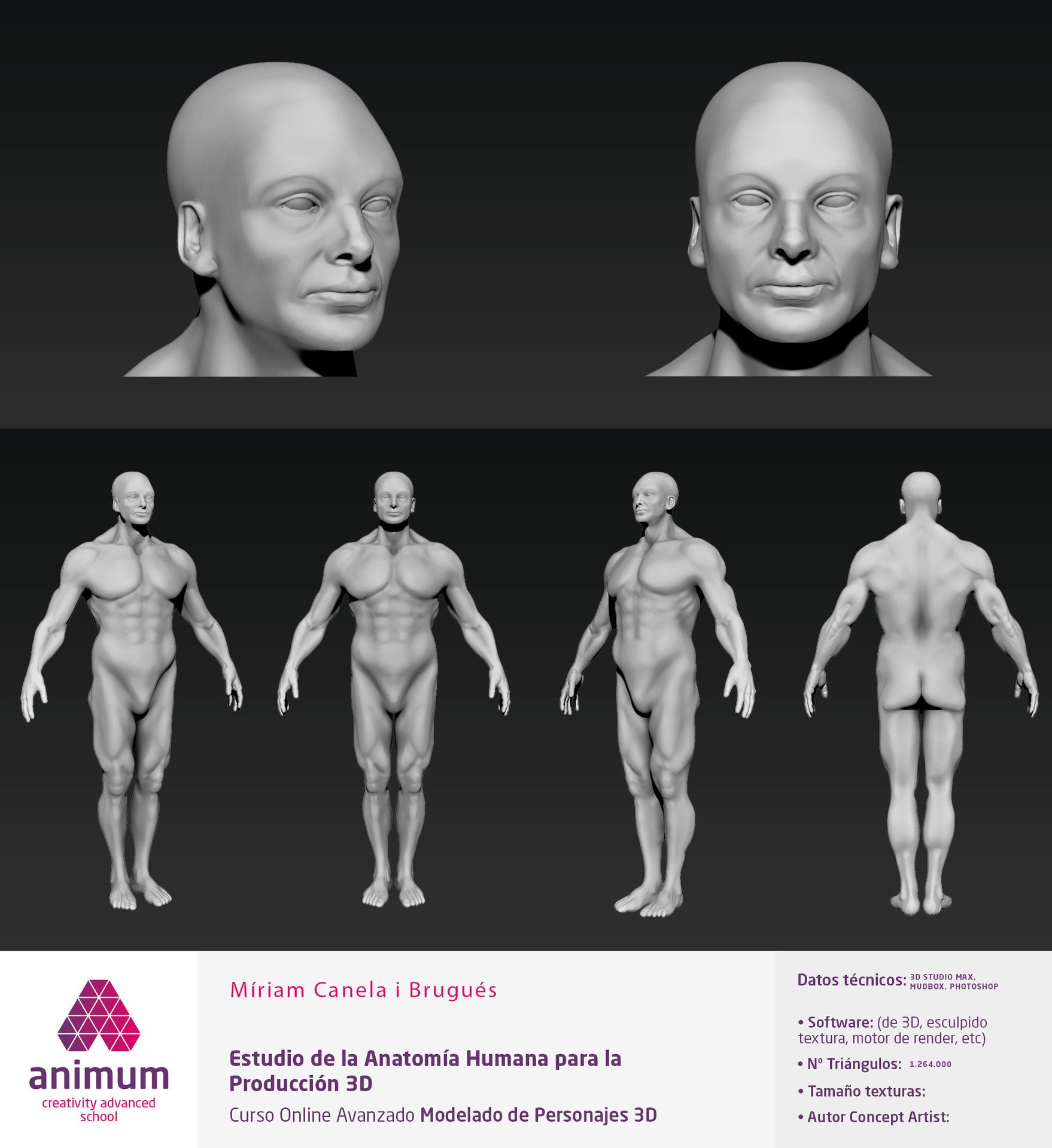 ANATOMÍA HUMANA Modelo 3D preparado para producción y animación ...