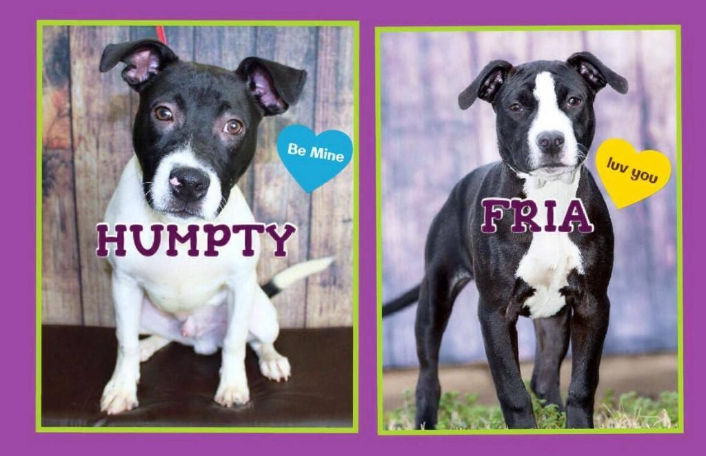 This Weeks Rescue Dogs Need You, meet Humpty & Fria! (With