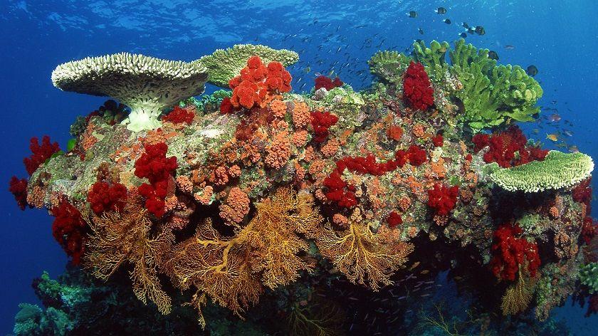 что такое кораллы картинка   Большой барьерный риф ...