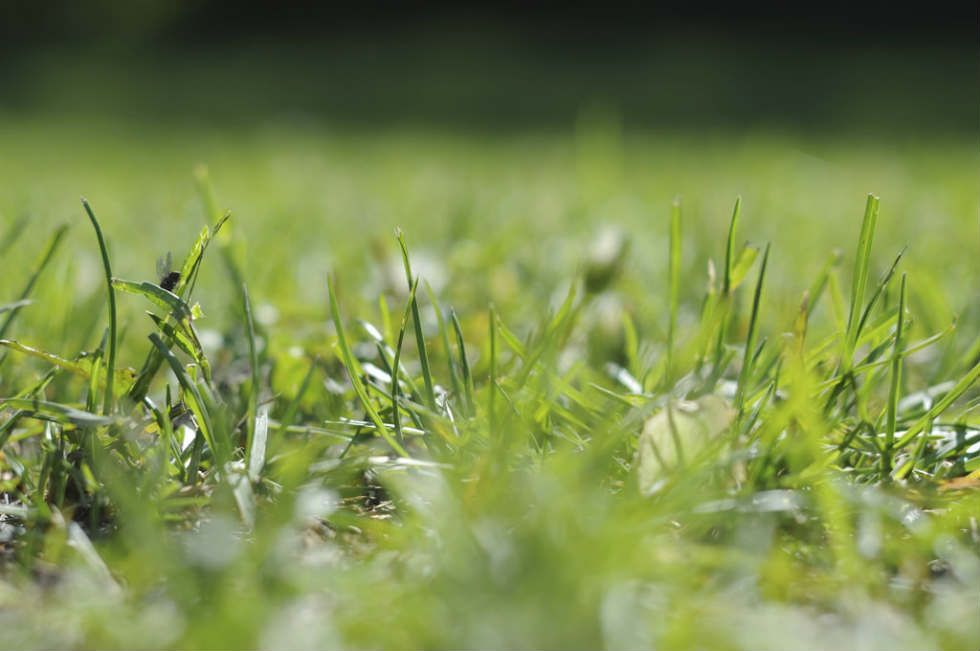 How Long Does It Take To Grow Grass From Seed Grass Grass Seed Seeds