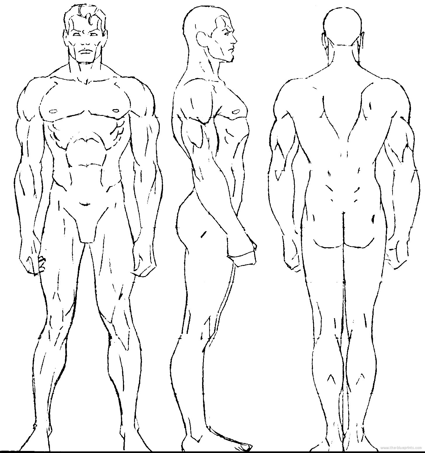 human proportions - Google Search | Cuerpo masculino | Pinterest ...