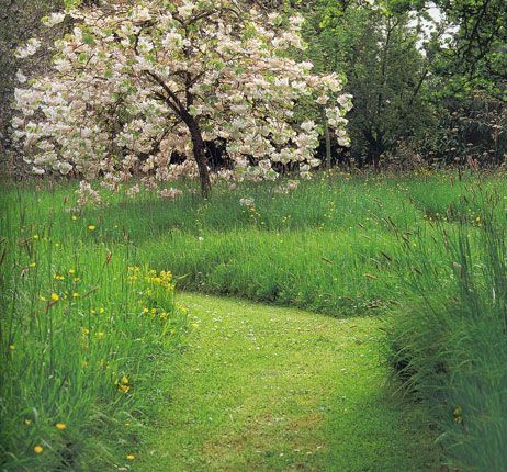Meadow path meadows pinterest paths gardens and for Wild grass gardens
