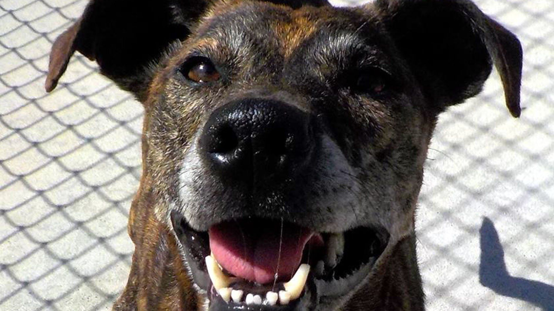 Dog pound in Stark County reaches capacity