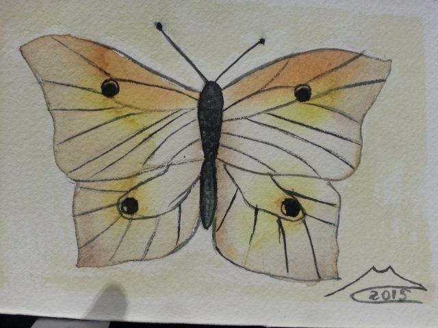 Farfalla 24 febbraio 2015