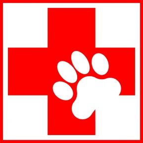 First Aid and CPR for your pet! Everyone should know!