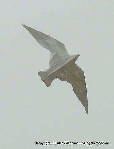 Class: Tyvek Star Bird Kite