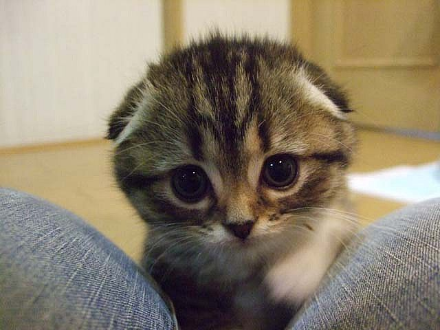 5 9 8 Jpg Cutiepatooties Cute Cats Cats Kittens