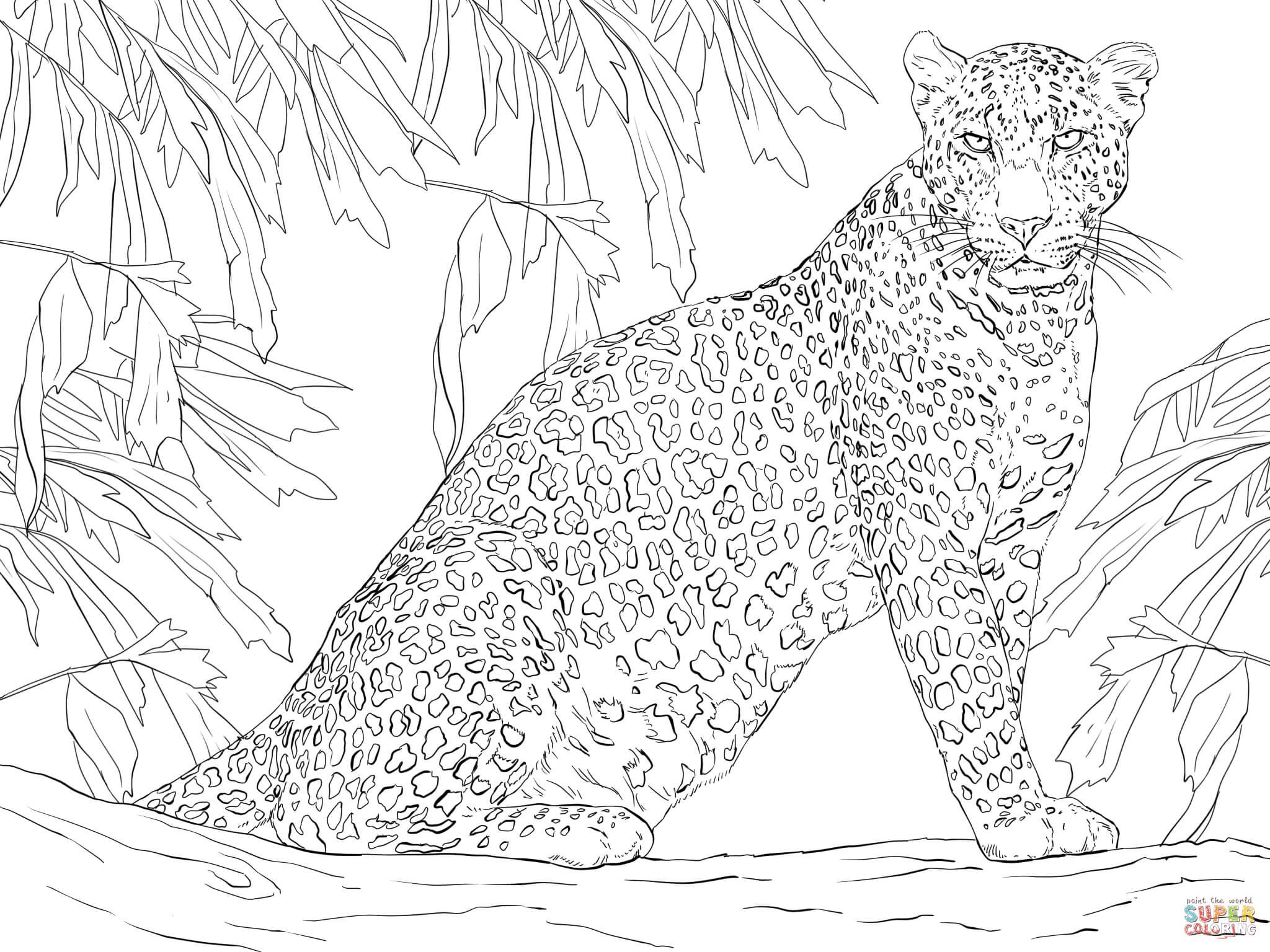 Leopard Sitting on Tree Animal coloring pages Cat