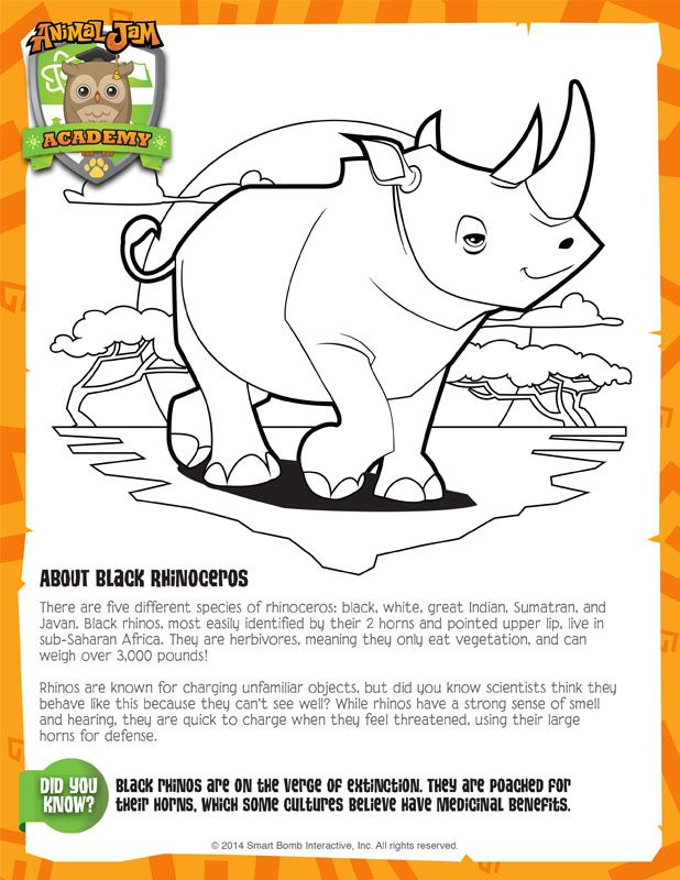 Black Rhino Animal Jam Academy Creature Features