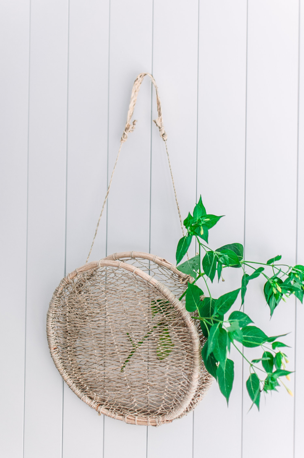 Circular Llevar Hanging Basket — Xinh & Co.   Basket wall ... on Decorative Wall Sconces For Flowers Hanging Baskets Delivery id=23608