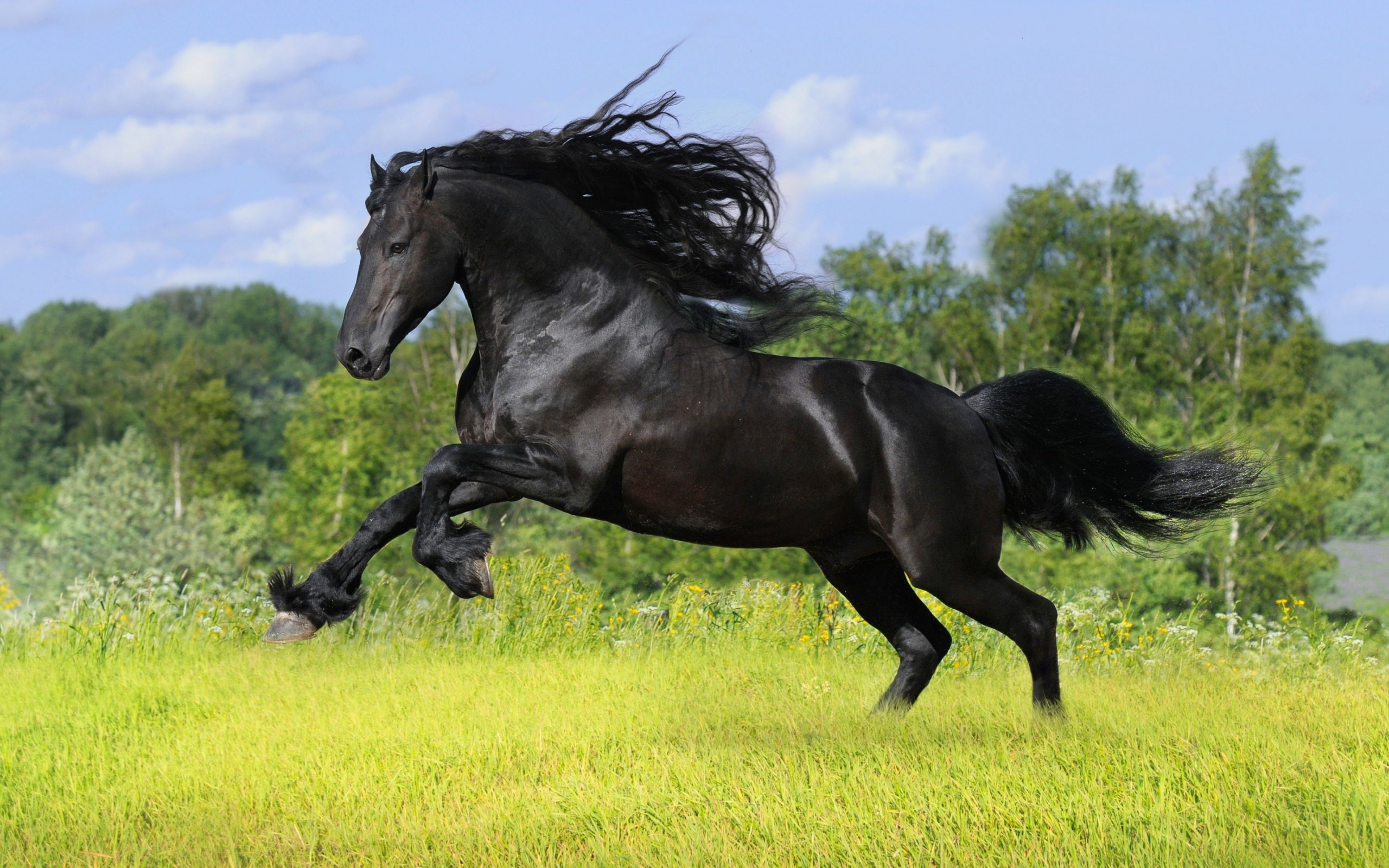 1159 Horse HD Wallpapers
